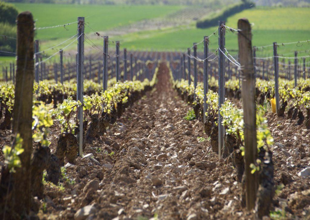 Domaine Charton, Viticulteurs à Mercurey -